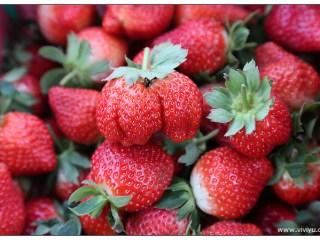 [苗栗.旅遊]苗栗大湖.瑪琪朵溫室草莓園&田媽媽餐廳.雲也居一~薑汁撞奶