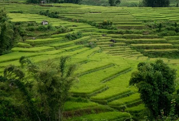 Rice hut. Flores