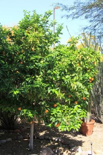 Raftriver Marmalade