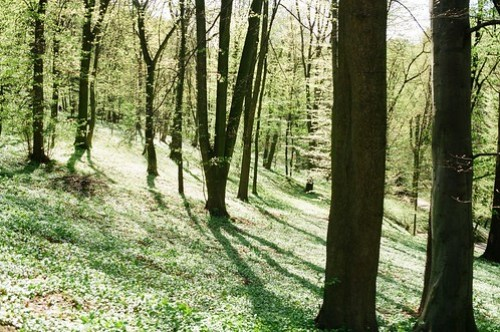 in the forrest