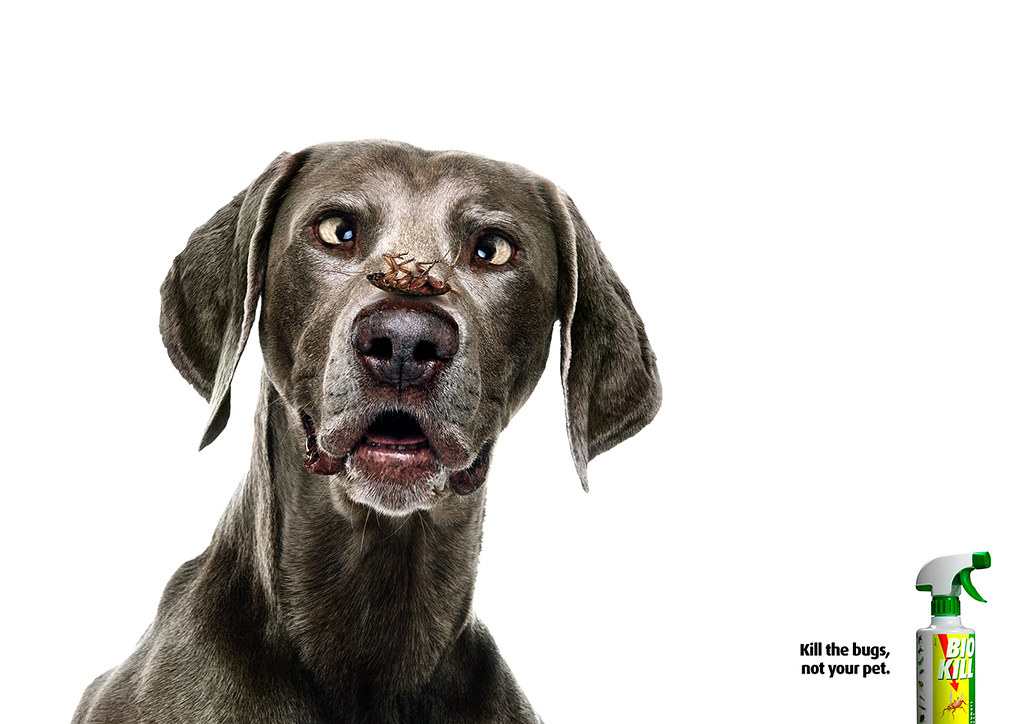 Bio Kill - Dog