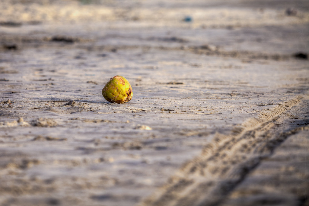 A coconut washed ashore