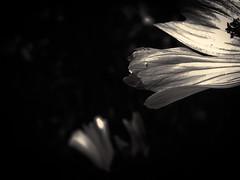 Fleurs des champs - 03