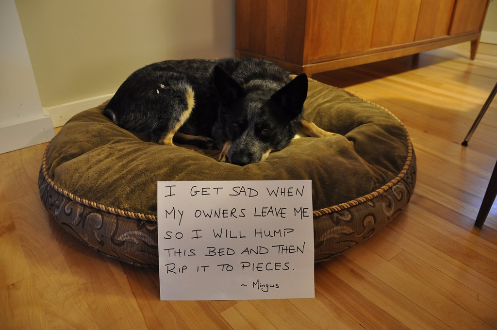 Dog Shaming by Jennoit, on Flickr