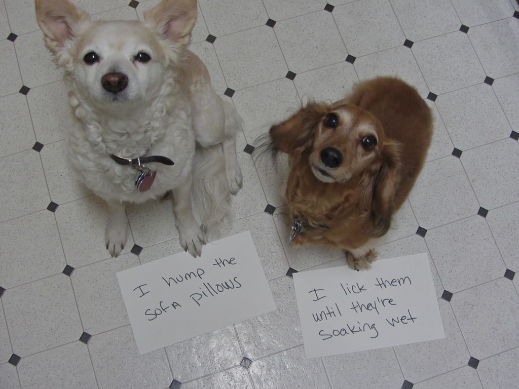 Shameful Dogs by Pretty Poo Eater, on Flickr