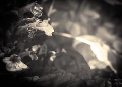 Fleurs des champs - 06