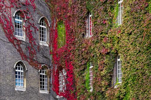 Autumn at St John's College