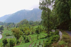 """Village gardens at Lake Batur • <a style=""""font-size:0.8em;"""" href=""""http://www.flickr.com/photos/29204155@N08/18067651809/"""" target=""""_blank"""">View on Flickr</a>"""