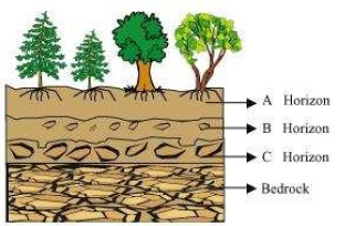 NCERT Solutions for Class 7th Science Chapter 9   Soil Image by AglaSem