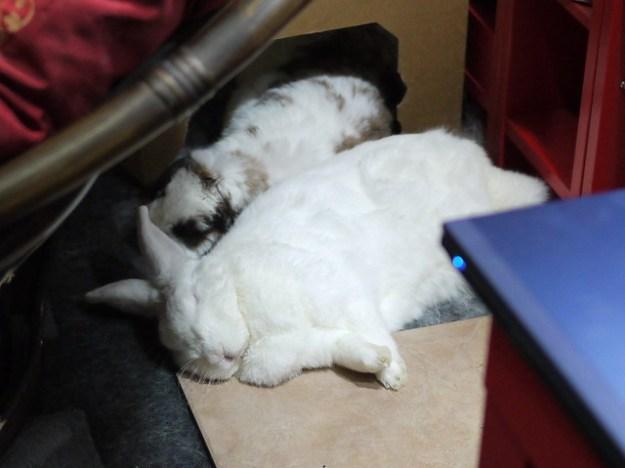 gus sleeping