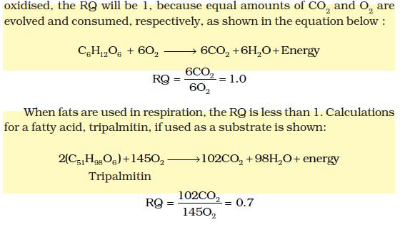 NCERT Class XI Biology: Chapter 14   Respiration in Plants