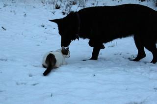 Gimli does not like the snow