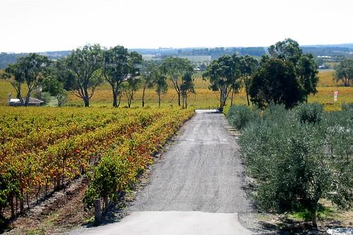 IMG_1094: McLaren Valley Vineyard