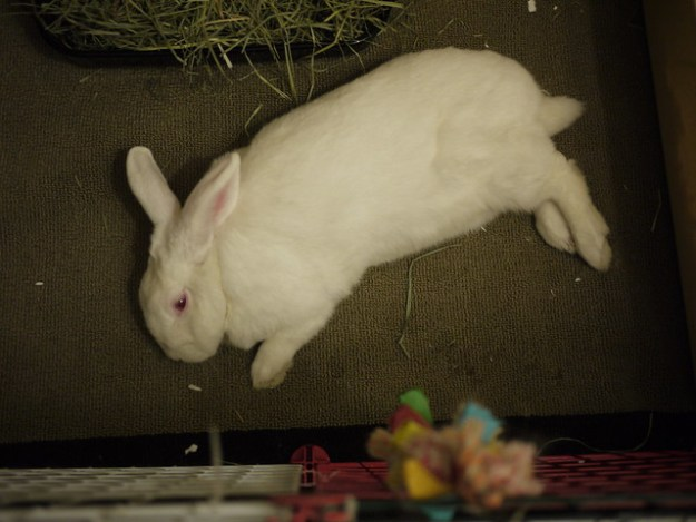 gus flopped on his side (from above)