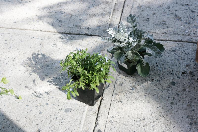 sidewalk, plants