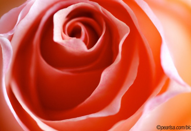 A rose by any