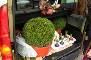 En naar huis met een koffer vol planten