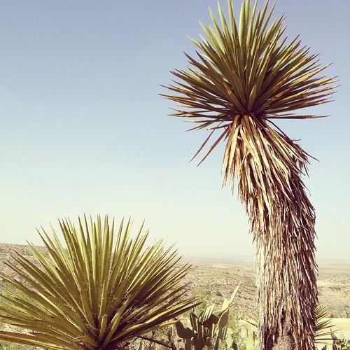 Yucca Living Desert State Park Carlsbad New Mexico Chihuahuan IMG_6969 by Dallas Photographer David Kozlowski