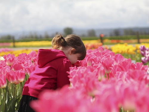 smelling the bright pink tulips