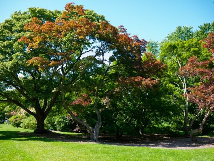 Arnold Arboretum 10