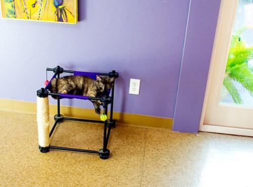 DIY: Cat Bed Makeover