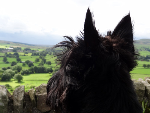 2012-08-26 Molly looking out over Teesdale