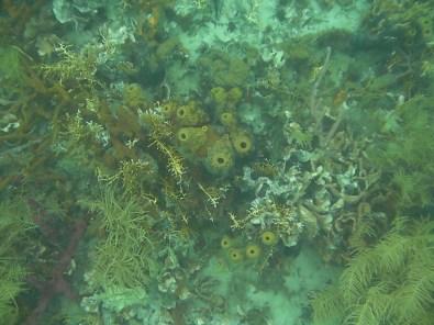 Corales de Colores del Arrecife