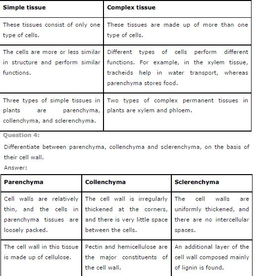 NCERT Solutions for Class 9th Science Chapter 6 Tissues
