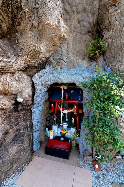 Ω3: The Giant Camphor of Kawago