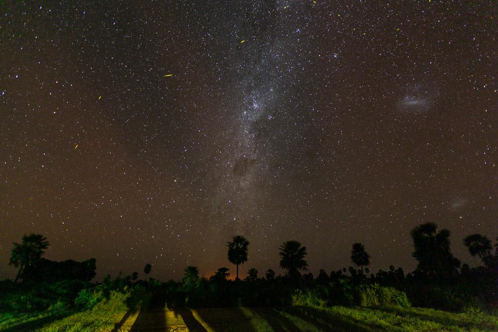 El centro de la vía Láctea y algunas luciérnagas se observan sobre las Palmeras en una majestuosa noche estrellada en la Reserva 3 Gigantes. Los increíbles cielos estrellados sólo pueden verse a grandes distancias de las ciudades. (Tetsu Espósito)