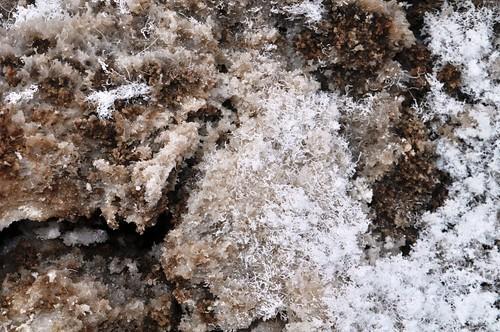 Fresh Salt Crystals in Badwater Basin, Death Valley National Park, Calif.