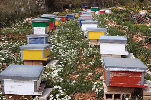 lebanese beehives