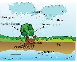 NCERT Solutions for Class 7th Science Chapter 17   Forests Our Lifeline