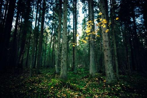 Långängarnas naturreservat (Explore #350 121018)