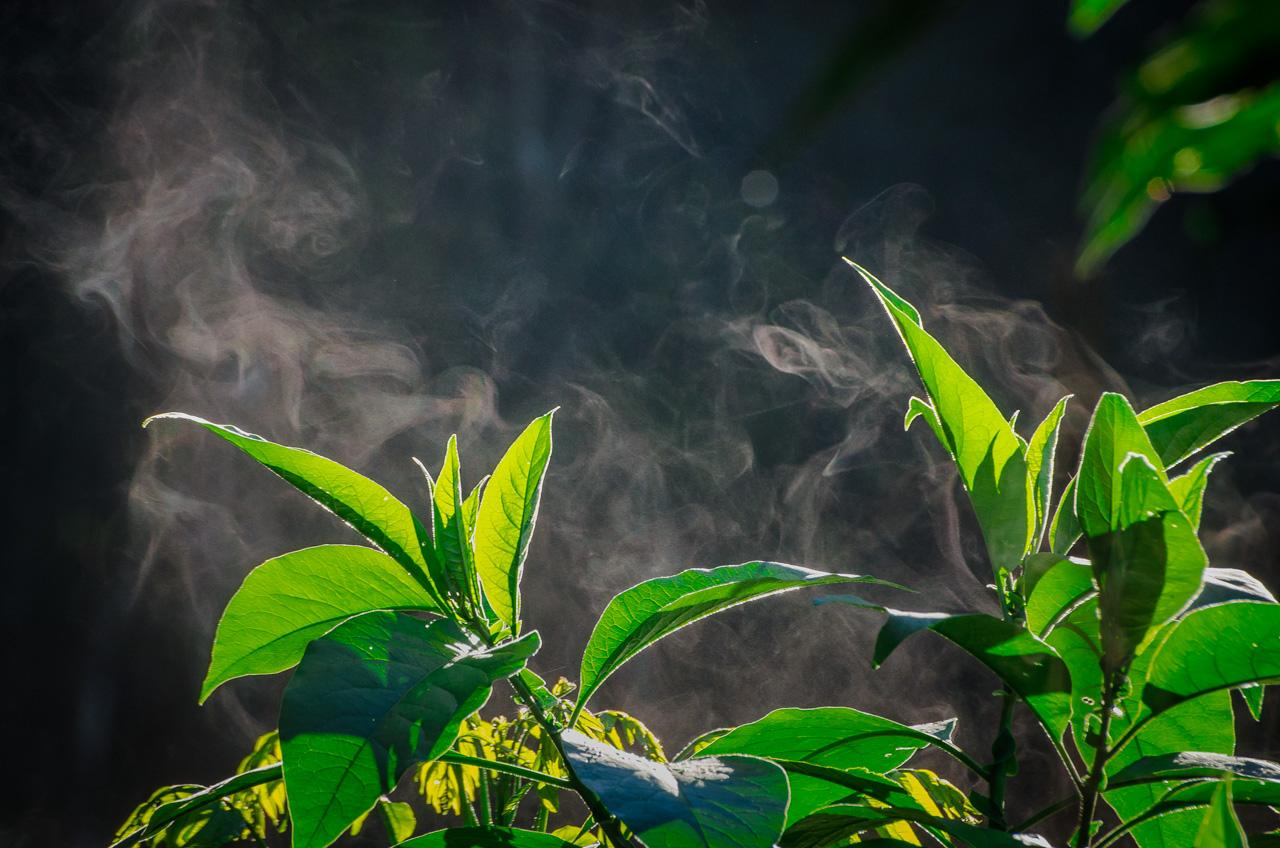 A medida que el sol se levanta y aplica más temperatura al bosque se pueden ver pequeños despojos de vapor desde las plantas que habitan en la Reserva Morombí. (Elton Núñez)