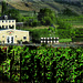 Eau Vivre Winery and Vineyard