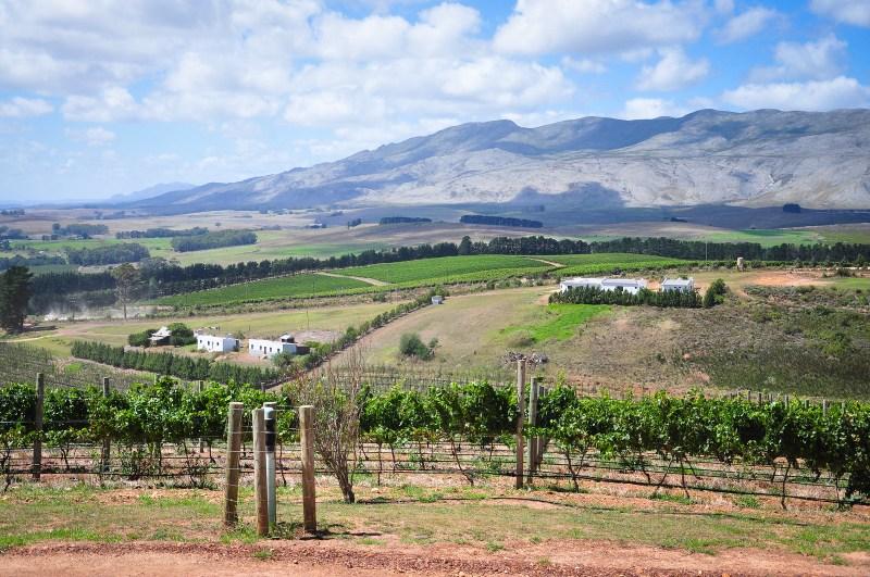 20140225-Etelä-Afrikka 2014 346