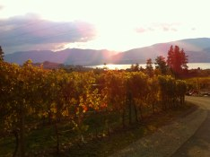 View from Daydreamer Winery - 2013 copy