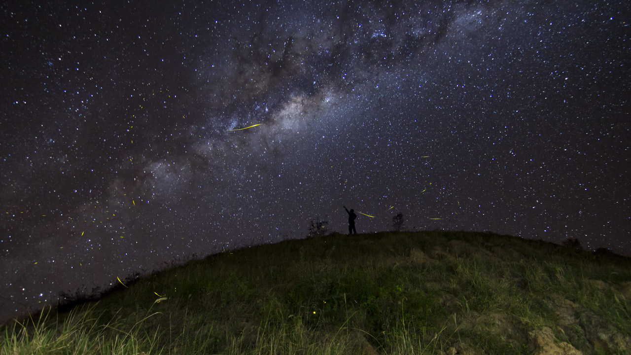 Luciérnagas y estrellas se observan en esta toma donde gran parte del centro de la vía láctea cubre el firmamento.