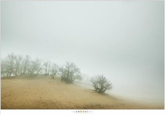 Bedafse Bergen in de mist