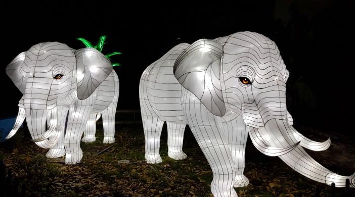 Espèces en voie d'illumination - Jardin des Plantes, Paris