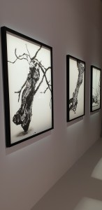 Ruinart x Vik Muniz, Shared Roots, Palais Brongniart