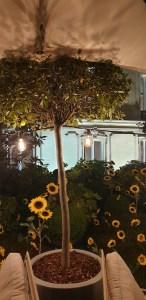 Joy, terrasse de l'hôtel Barrière le Fouquet's Paris