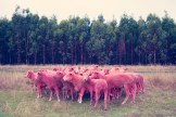 pink Sheep I GRAY MALIN dream series FashionDailyMag