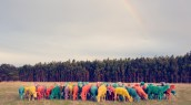Rainbow Sheep I feature GRAY MALIN dream series FashionDailyMag