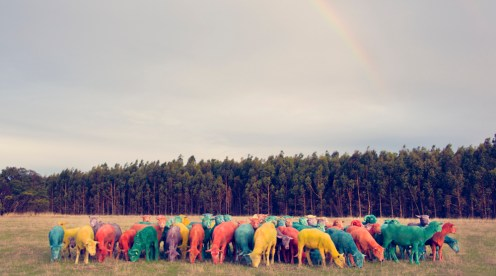 Rainbow Sheep I feature GRAY MALIN dream series FashionDailyMag