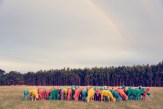Rainbow Sheep I GRAY MALIN dream series FashionDailyMag