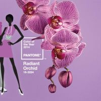Pantone's Colour for 2014: Radiant Orchid!