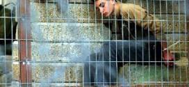 """بعد تقليص الزيارات: 80 عائلة تزور أبناءها بـ""""جلبوع"""" على نفقتها الخاصة"""