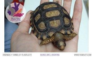 Tortuga no come - enferma - solo duerme - veterinarios